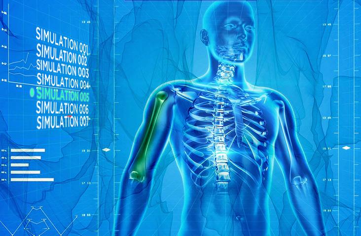 Real world human body simulation